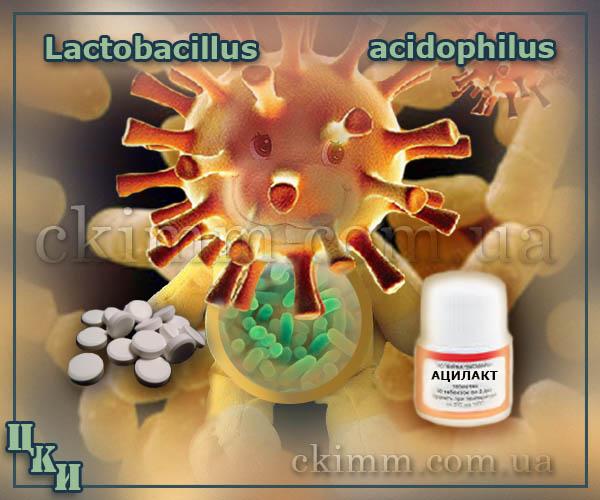 Ацилакт таблетки представляют собой микробную массу живых, антагонистически активных ацидофильных лактобактерий штаммов Lactobacillus acidophilus