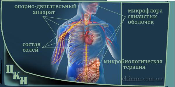 Защитные функции организма наглядно. Коррекция иммунитета - восстановление защиты