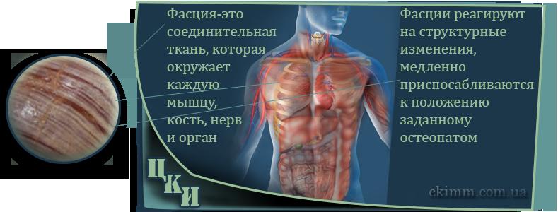сеанс остеопатии подразумевает манипуляции с фасциями корректируя функциональное состояние организма
