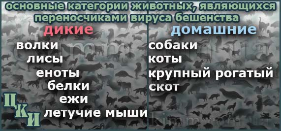 животные, являющиеся переносчиками вируса бешенства