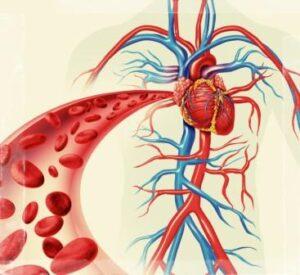 КРОВЕНОСНАЯ СИСТЕМА поставляет всем клеткам организма питательные вещества
