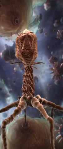 Уничтожение бактериофагами инфекций